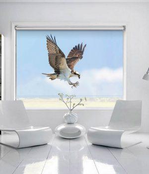 Falcon Roller Blind